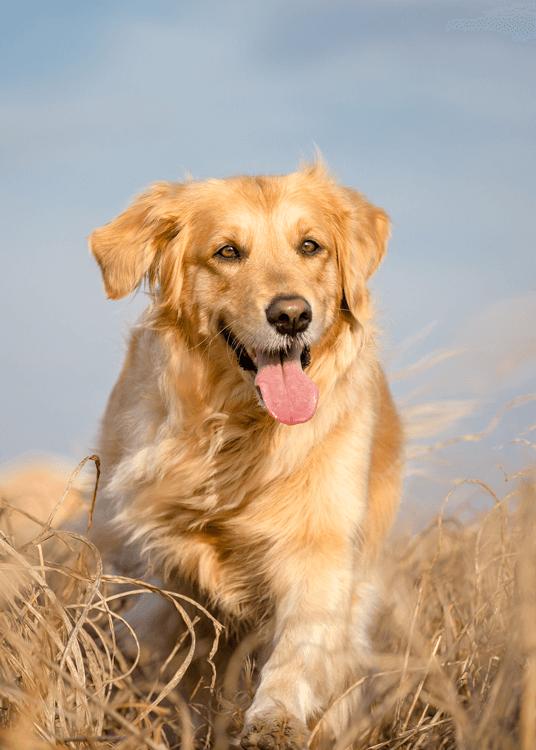 Nahrungsergänzungen für Hunde