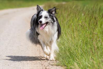 Wohlfühlen in der Natur mit unserer Nahrungsergänzung 4-BEINER NATURRY-DOG