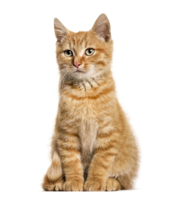 Nahrungsergänzung für Katzen