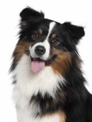 gepflegtes glänzendes Fell mit BEAUTY-DOG von 4-BEINER