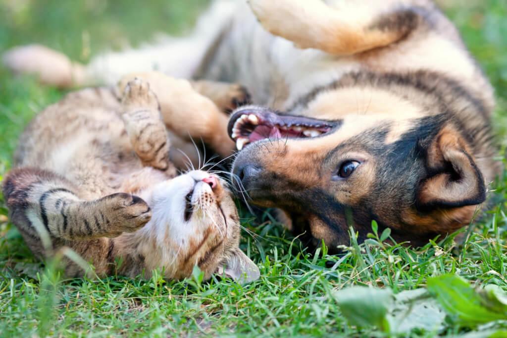Nahrungsergänzungen Hund und Katze zum Wohlfühlen in der Natur