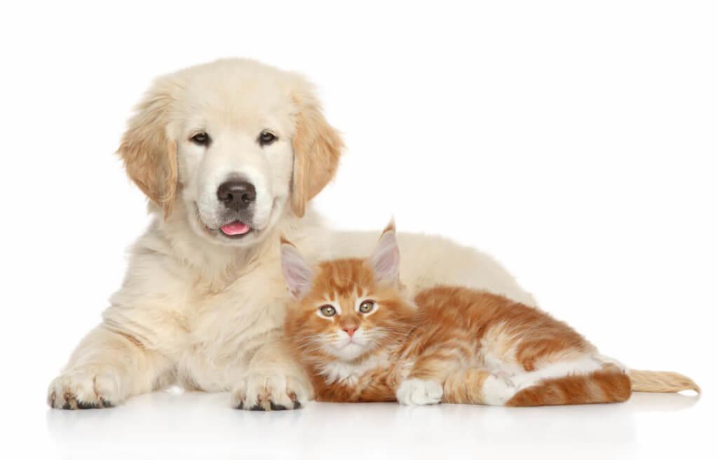 Nahrungsergänzungen für Hunde und Katzen