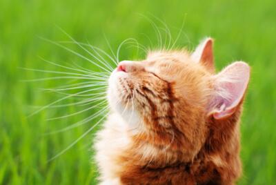 schönes Fell Katze