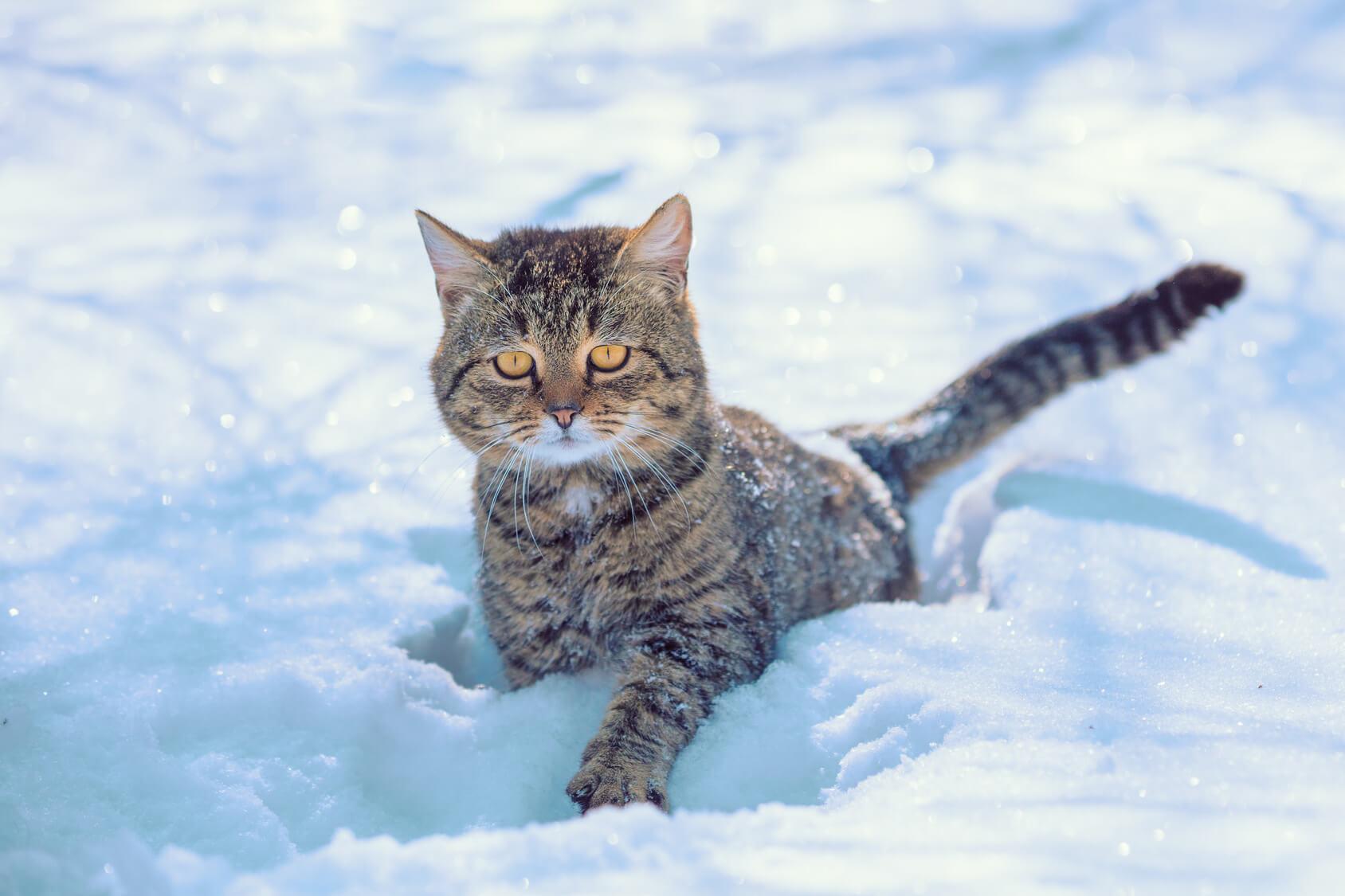 Vitality-Cat Nahrungsergänzung