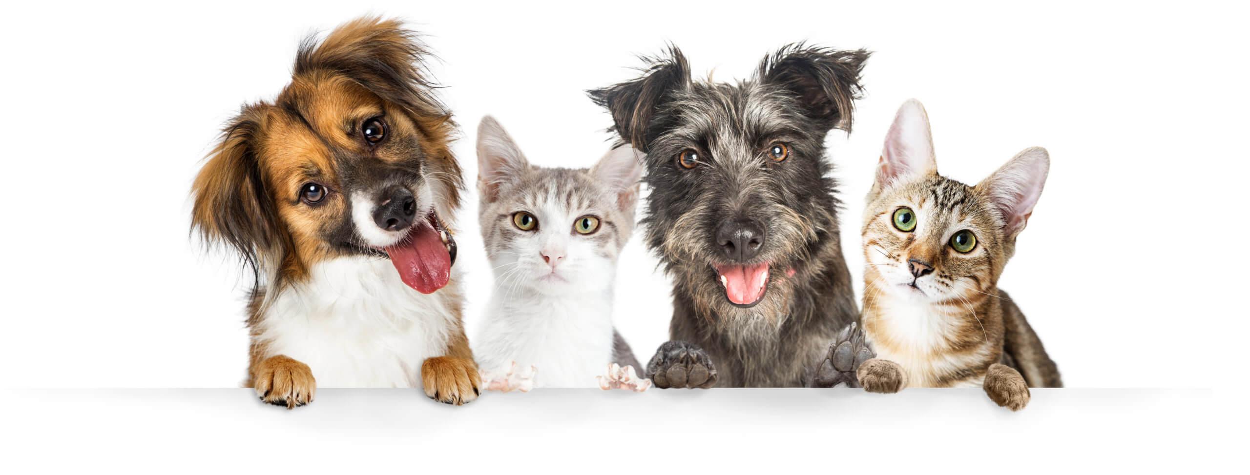 Schöne Zähne für Hund und Katze